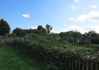 Some of the allotments in Messingham