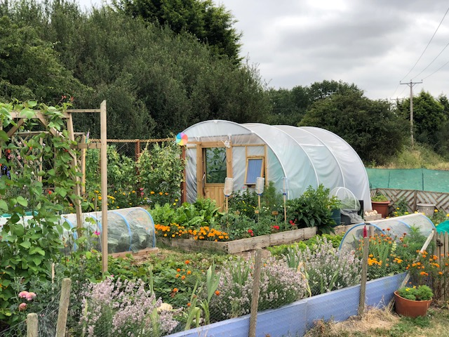 Poly tunnel on a Messingham allotment